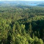 prachtige groene bosrijke omgeving in zweden stabiele haven in scandinavie