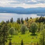 prachtige landschappen in regio van zweeds huis te koop als beleggingspand