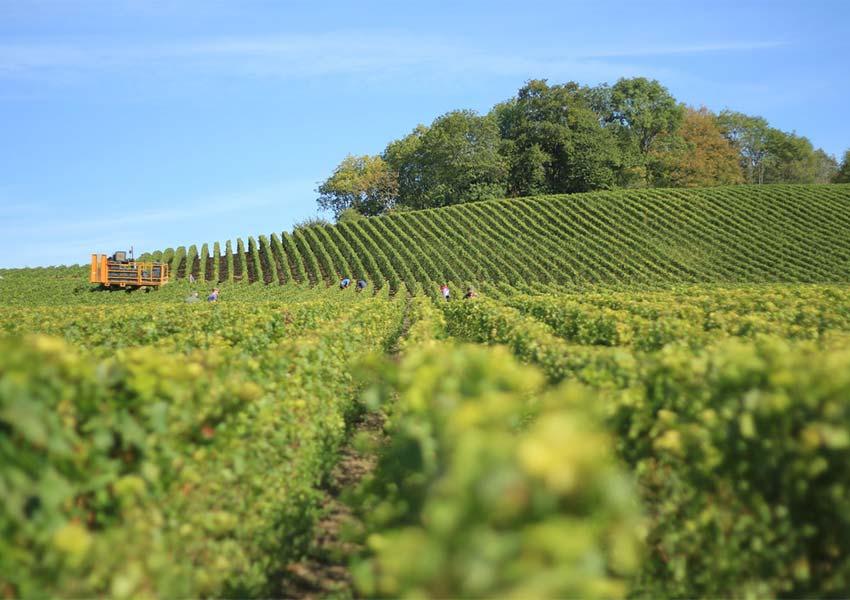 frankrijk wereldbekend voor champagne wijnen en kazen prachtige wijngaard in reims