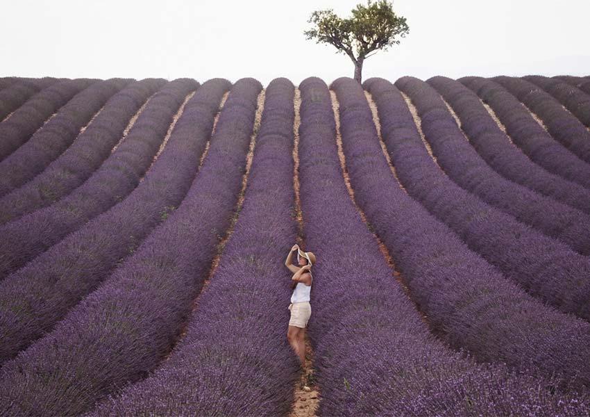 la douce france prachtige lavendelvelden prachtig land