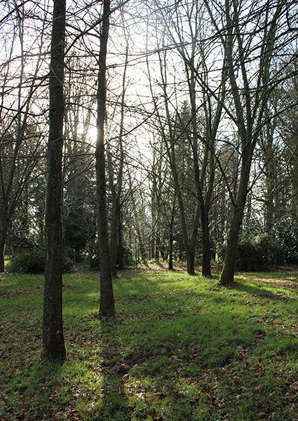 groene omgeving en bomen rondom het luxeresort oase van rust aantrekkelijk golfresort inclusief spa